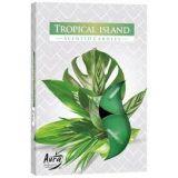 Podgrzewacz zapachowy - Tropikalna Wyspa 6szt