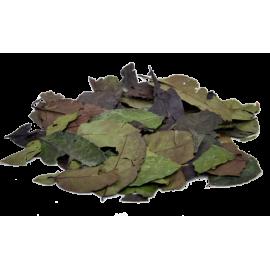 Guayusa całe liście - 500g