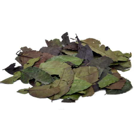 Guayusa całe liście - 50g
